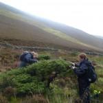 collecting juniper cuttings