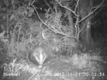 badger and egg_0001