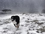 'Molly in the Snow' Richard Cree
