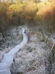 Nature Trail in winter